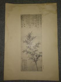 民国珂罗版:赵孟頫~出墙翠竹图(秦清曾藏品)