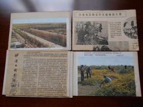早年【甘肃省民勤县沙生植物,卡片4张】
