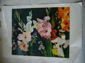 水粉画:菖兰花 印刷品 8开大小
