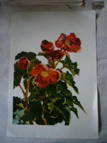 水粉画:海棠花 印刷品 8开大小