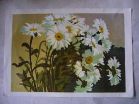 水粉画:白菊花 印刷品 8开大小