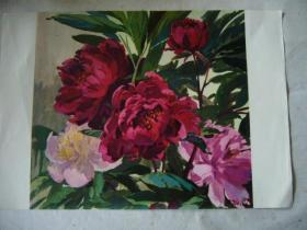 水粉画:牡丹花 印刷品 8开大小
