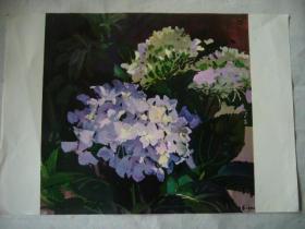 水粉画:绣球花 印刷品 8开大小