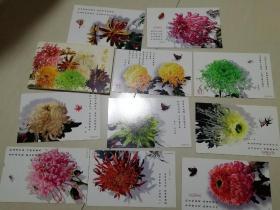 开封菊花邮资明信片十张