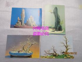 盆景 明信片:共4张