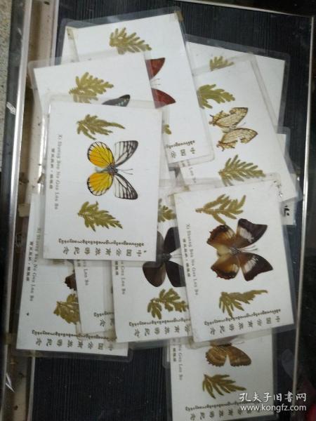 西双版纳蝴蝶标本 共18幅