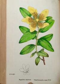 1902年  English Botany; Or, Coloured Figures Of British Plants  卷二  含164副手工彩图   25.5 cm x 17.5 cm