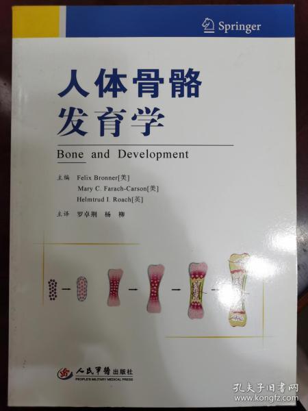 人体骨骼发育学