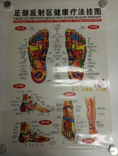 足(手)部反射區健康療法掛圖(兩開,兩張合售,紙筒卷寄)