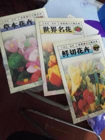 鲜切花卉 世界名花 草木花卉 宿根花卉