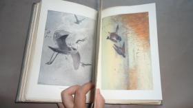 1895年 The Wild-Fowl and Sea-Fowl of Great Britain《英国野禽和海鸟》初版本 插图版 增补绝美彩色插图 品佳