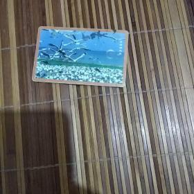中国电信电话卡 青海湖鸟岛