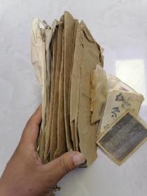 二三十年代 大兴安岭 满洲 等地 植物老照片一堆合售,附带外文稿