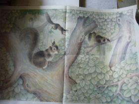 六年制小学课本语文第六册教学图片:松 鼠 印刷品 2开大小