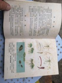 水稻 绿肥病虫害防治
