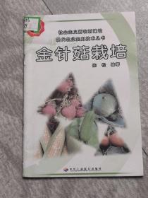 金针菇栽培