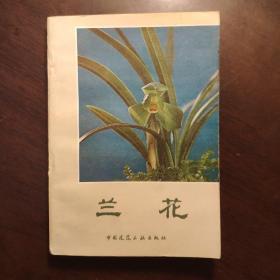兰花 (内有多幅沈渊如所养的兰花照片) 【1984年一版一印】