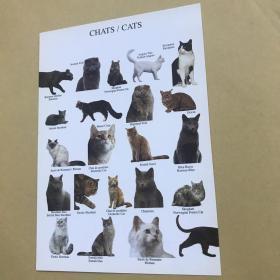 法國明信片,貓系列。