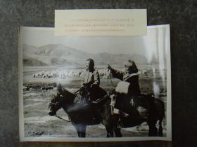 超大尺寸:1972年,在甘肃甘南州插队的下乡汉族、藏族女知青,骑马为羊群寻找牧场