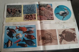富饶的西沙群岛--小学课本语文第五册教学图片