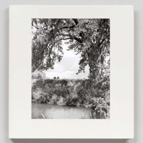 Robert Adams: Cottonwoods 罗伯特亚当斯: 白杨