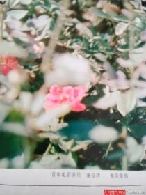 1983年挂历 明星美女  山水等 13张全