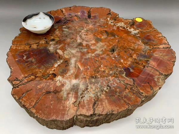 國外淘回 上億年形成的木化石茶臺