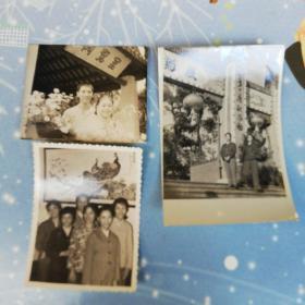 老照片  80年代羊城菊花展3张