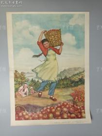 1958年 辽宁画报社一版一印 杨丕淑作《苹果丰收》宣传画一张