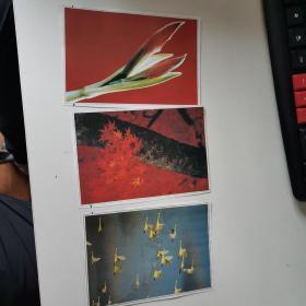 古玩收藏懷舊 老插畫 老照片 老剪報 名家畫作圖片 風景花鳥