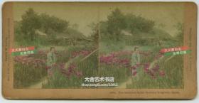 清末民国时期立体照片-------清代日本花园中美人老蛋白立体照片