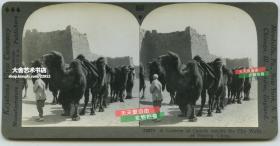 清末民国立体照片------民国北京北平城墙之下的骆驼运输队