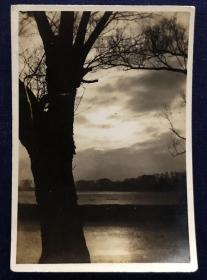 早期 垂柳老照片(垂柳含烟闻燕语,清波逐浪见鱼游。一行白鹭斜阳里,几叶轻舟碧水头。)