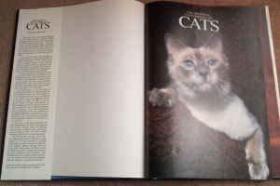 Encyclopedia of Cats-猫百科全书