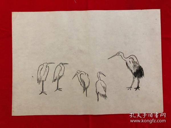 书画8952无款工笔白描花鸟画习作