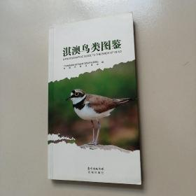 淇澳鸟类图鉴