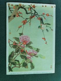16开,50年代,名家(陈之佛)绘画(样本)【山茶红梅】