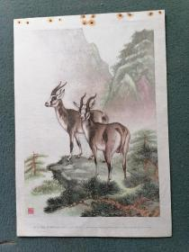 16开,50年代,名家(戈湘岚)绘画(样本)【羚羊】