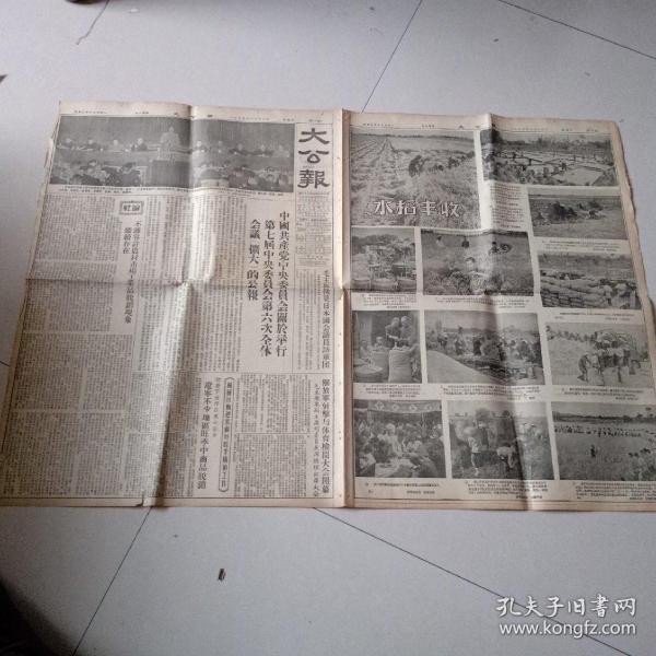 大公報1955年十月十六曰四版