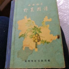 云南地区野菜图谱