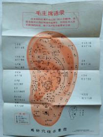 带语录的耳针穴位示意图