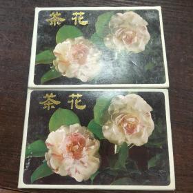 茶花明信片12张共二套