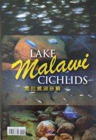 马拉威湖慈鲷