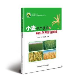 粮食种植技术书籍 小麦生产技术与病虫草害防治图谱