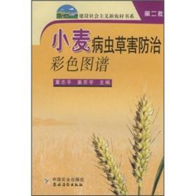 粮食种植技术书籍 小麦病虫草害防治彩色图谱