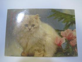 中国人民邮政明信片(空白片,益阳市人民印刷厂)(85821)