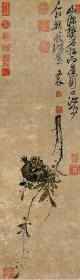 高清复制名家字画 清 徐渭 榴实图纸本91.4x26.5厘米