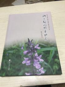 浙大校园野草野花 浙江大学校园植物