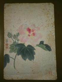 朵云轩木版水印:笺纸~谢稚柳花卉