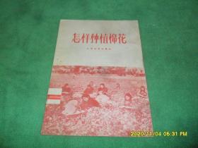 怎样种植棉花(1956年1版1印)